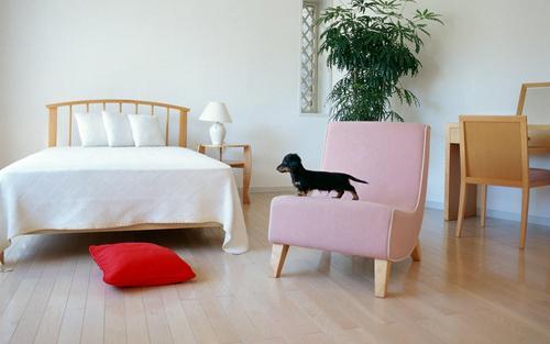Lovely Dog kertas dinding