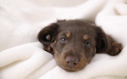Lovely Dog fondo de pantalla