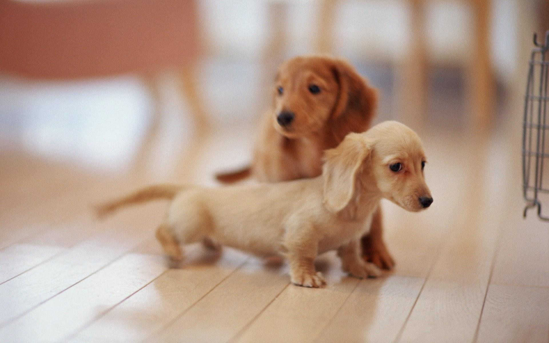 Puppies lovely dog wallpaper