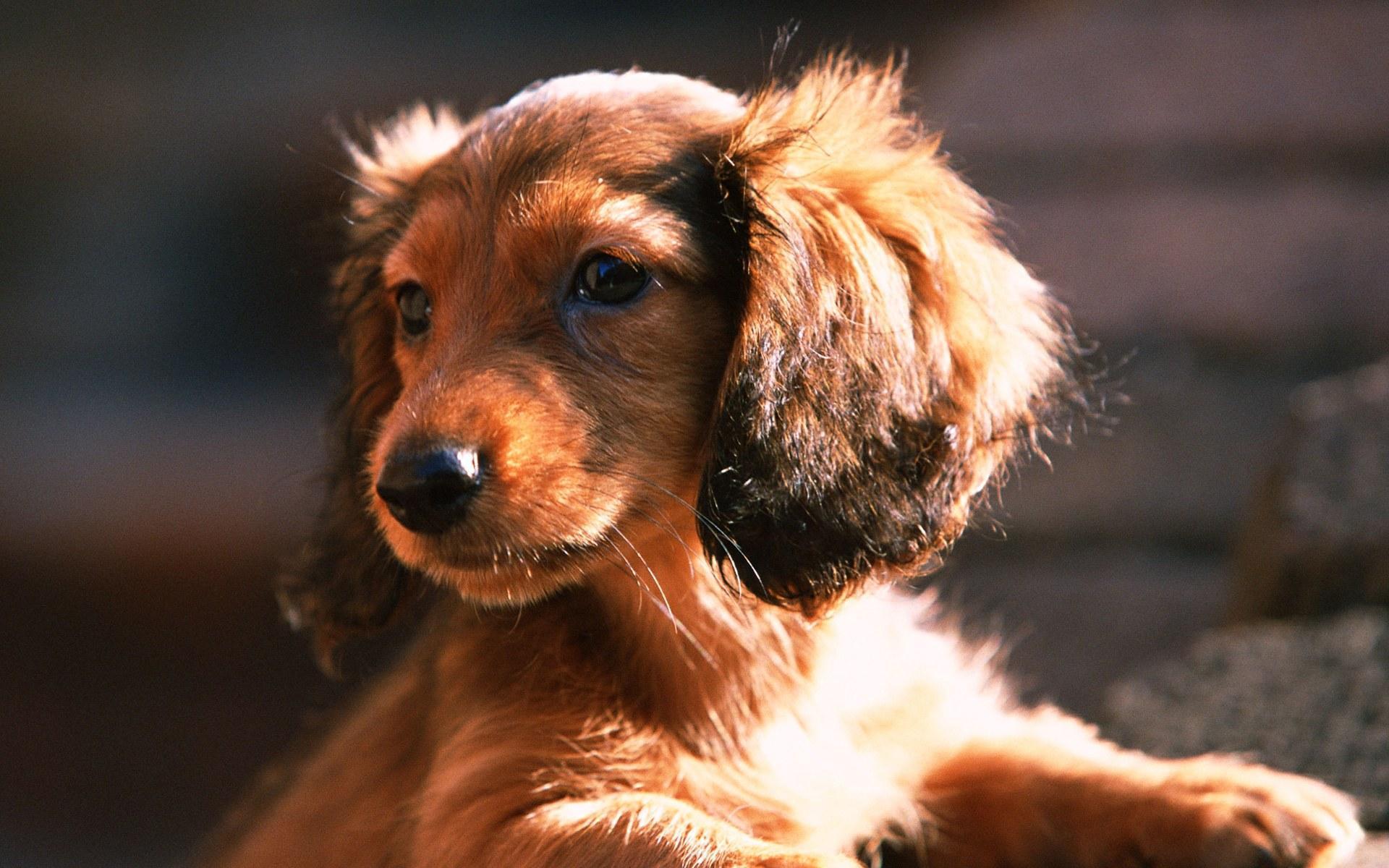 Lovely Dog achtergrond