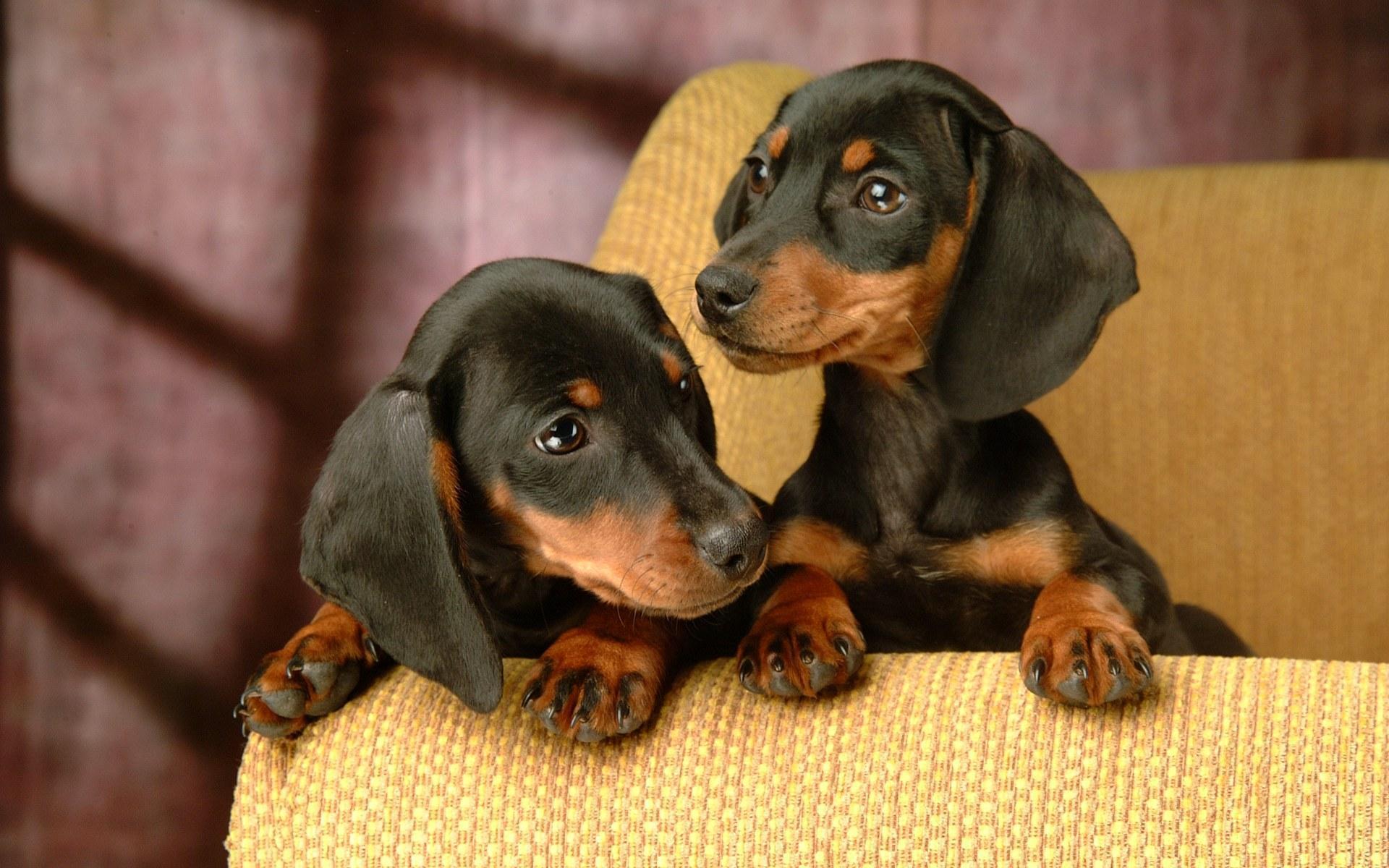 Lovely Dog Wallpaper Puppies Wallpaper 13935693 Fanpop