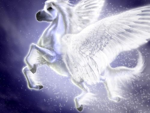 Pegasus & Unicorn