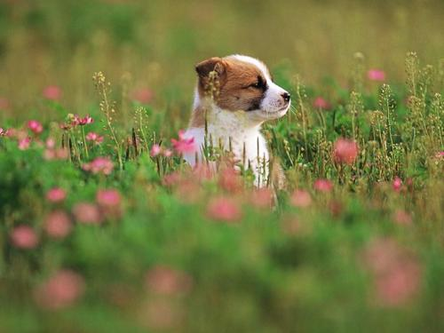 Pretty Dog in Garden