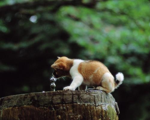 Puppies wallpaper entitled Pretty Dog in Garden