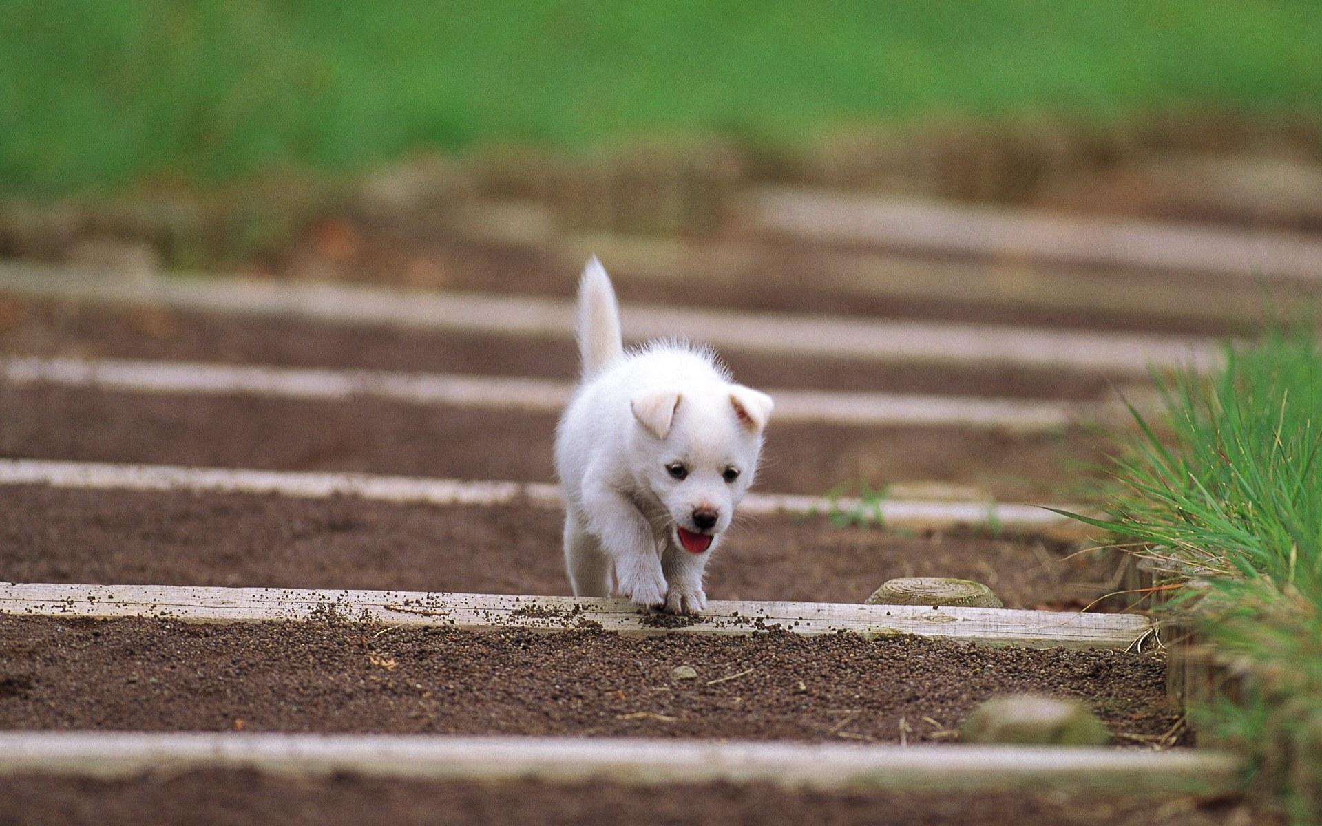 Pretty Dog in Garden