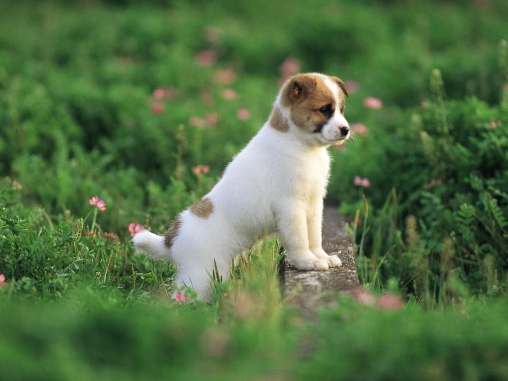 Pretty Dog kertas dinding