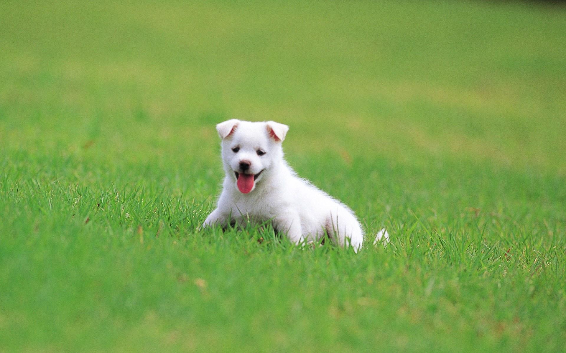 Pretty Dog hình nền