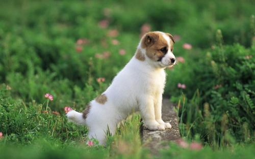 Pretty Dog wallpaper - puppies Wallpaper