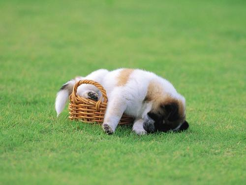 Pretty Anjing in Garden