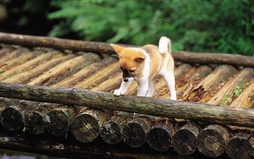 Pretty Hunde in Garden