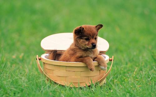 Pretty chiens in Garden