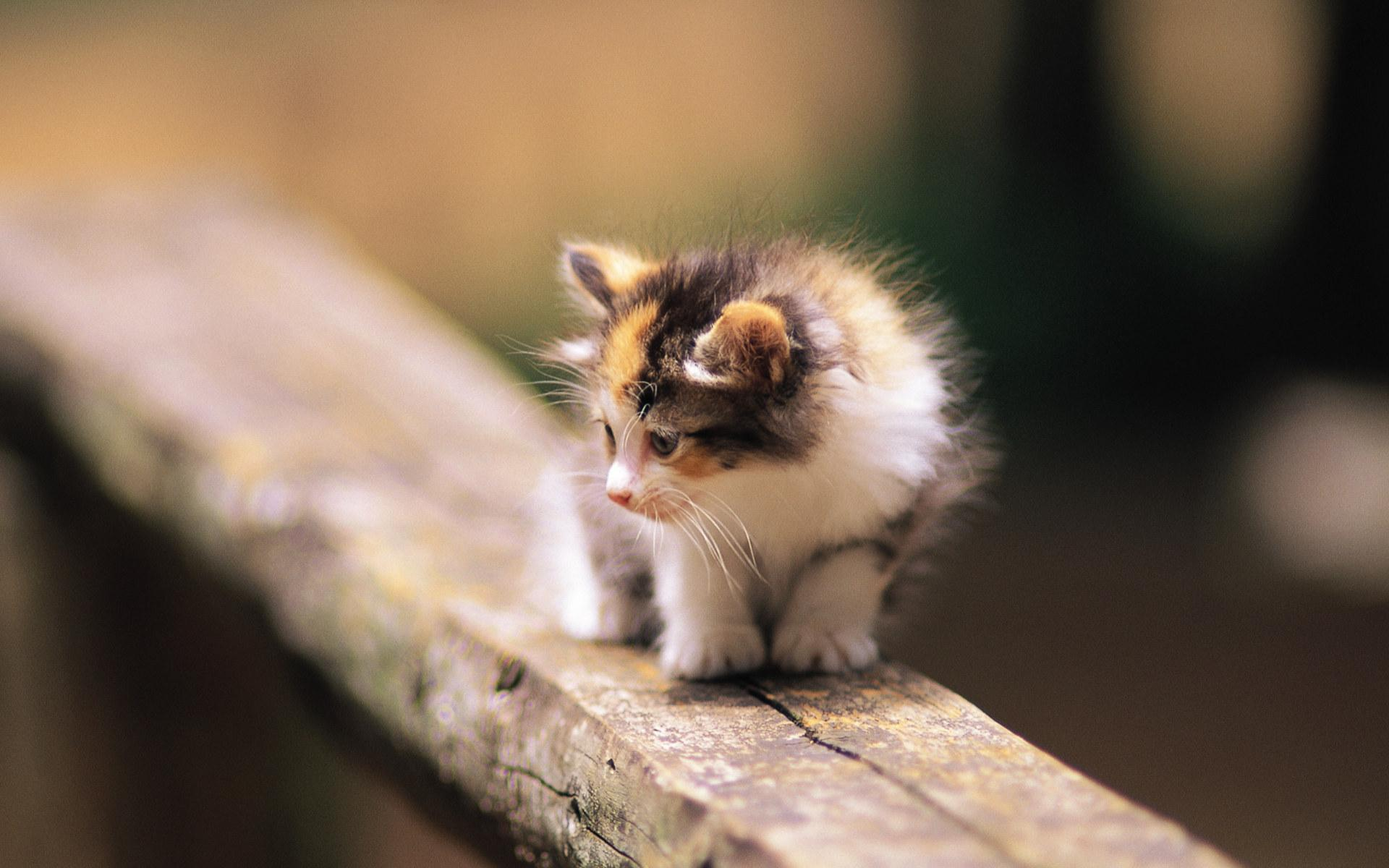 kittens images pretty kittens in yard wallpaper photos