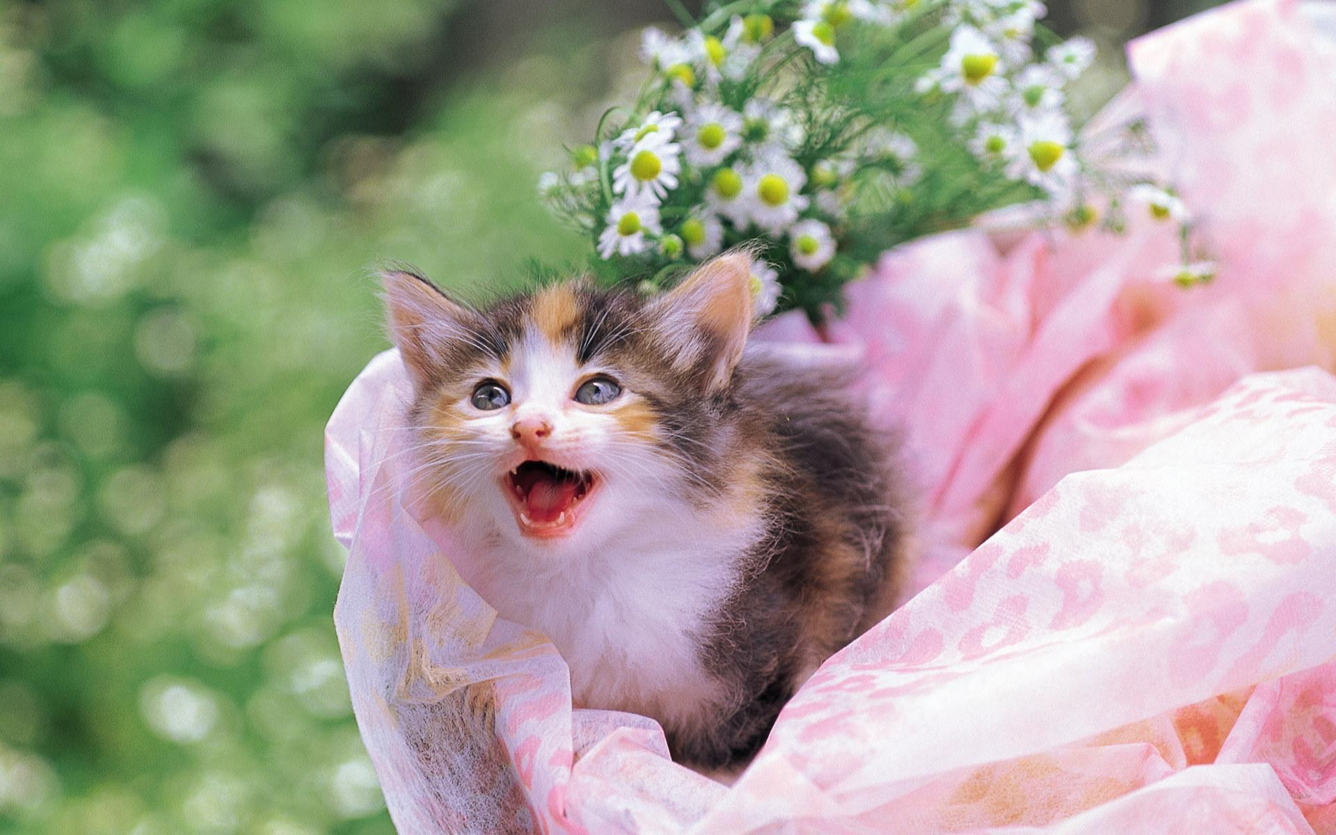 pretty kittens in yard kittens wallpaper 13937784 fanpop