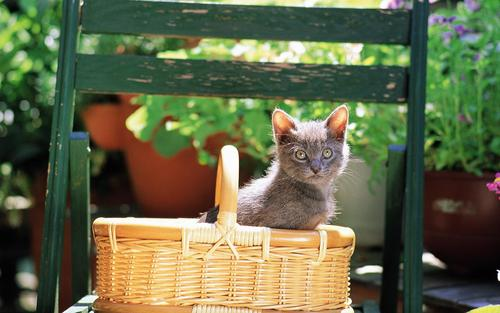Pretty 고양이 in yard