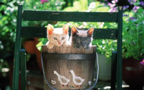 Pretty Kittens in yard