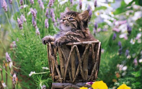 Pretty mèo con in yard
