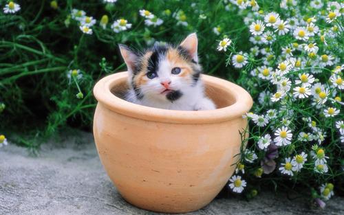 Pretty gatitos in yard