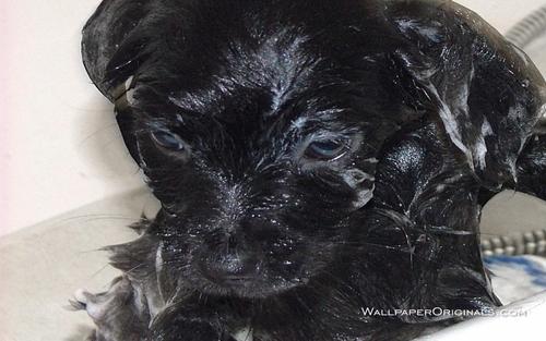 Puppy Bathing
