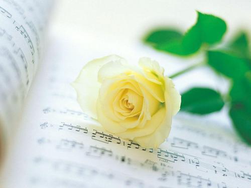 Romantic rosas