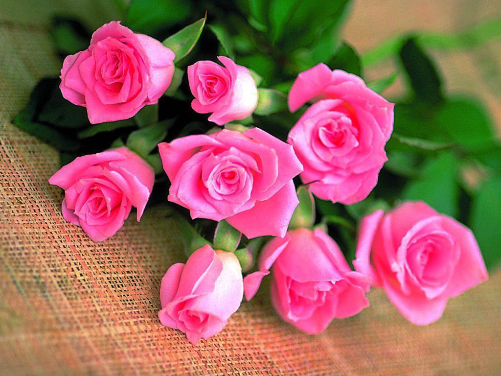 Roses images The Rose of Love HD wallpaper and background photos