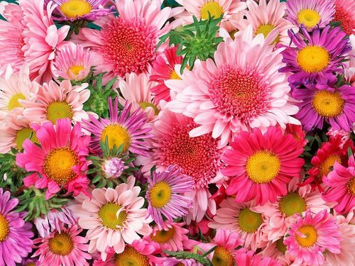 Flowers wallpaper titled beleza pura