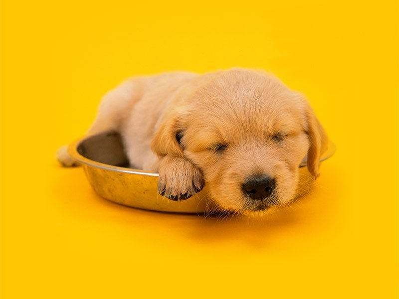 cute 小狗