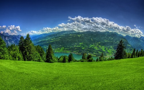 grassy field; distant mountains