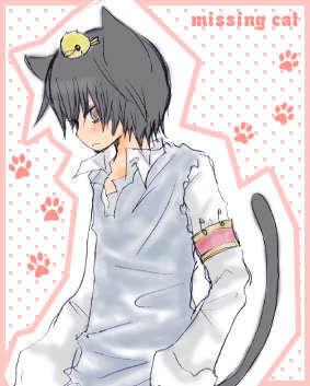 hibari cat