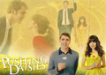 01579 - pushing-daisies photo