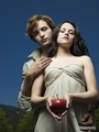 Breaking Dawn Photos - twilight-series photo