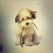Cutie <3 - dogs icon