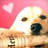 Dogs photo titled Cutie <3