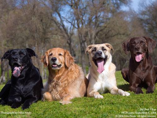 Dog Hintergrund