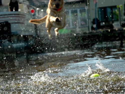 Dog দেওয়ালপত্র