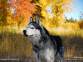 Dog Wallpaper - dogs wallpaper