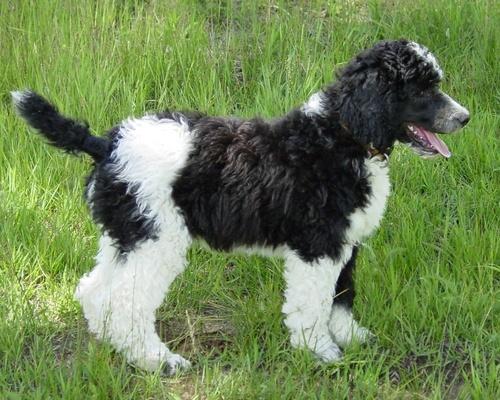 Dog پیپر وال
