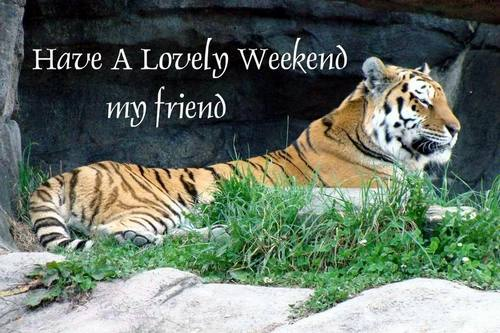 Image result for have a lovely weekend