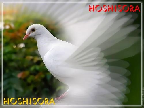 Hoshisora