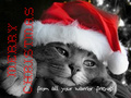 Warrior Christmas - warrior-cats-of-the-clans photo