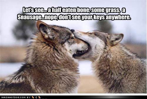 lol....dogs
