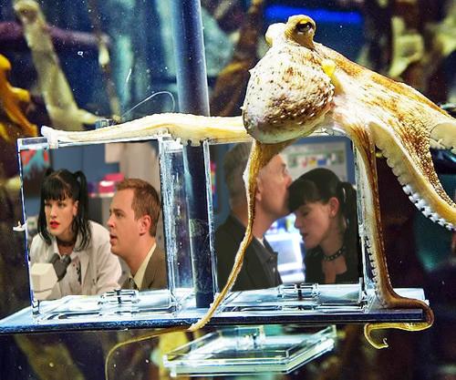 paul the octopus is gabby!!!! hahahaha