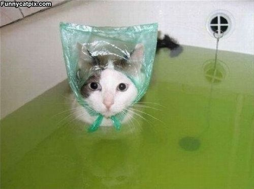 the poor cat wants its ears dry!