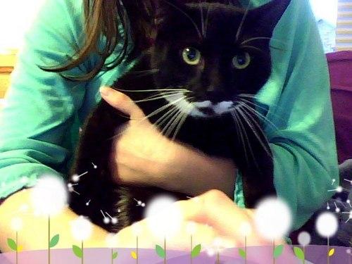 Beauty- my kitty kat