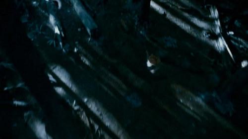 """Capturas Clip """"Cullen persiguiendo a Victoria"""""""