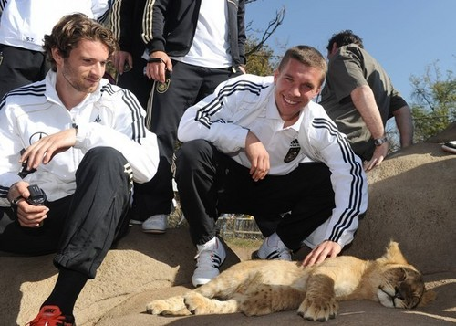 German team visiting in a lion park in South Africa