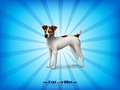 Jack Russell - jack-russell-terriers wallpaper