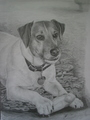 Jack Russell - jack-russell-terriers fan art