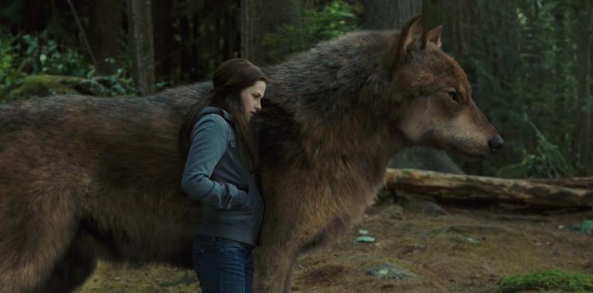 Werewolf twilight jacob