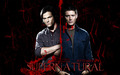 SPN 6 - sam-winchester wallpaper