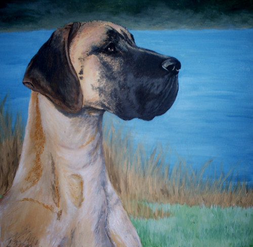 The Beautiful Great Dane